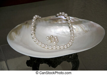 sea shell and pearl - a sea shell and pearl
