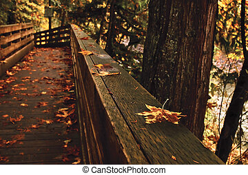 Wooden trail in Snoqualmie park - Beautiful maple leaf on a...