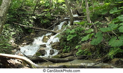 Clean fresh water of a forest strea
