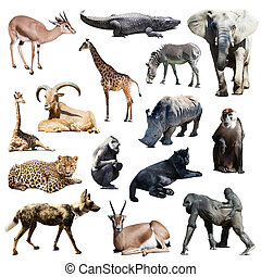 Set of african animals on white