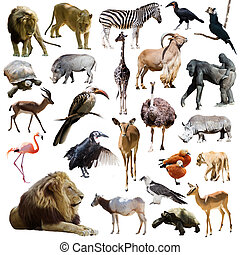 lions and other African animals Isolated over white...