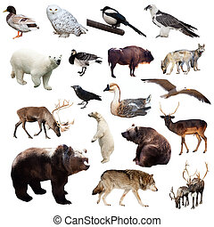 Set of european animals Isolated on white background
