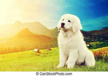 Cute white puppy dog sitting in mountains. Polish Tatra...