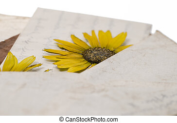 pressed flower in letter - pressed yellow flowers in old...