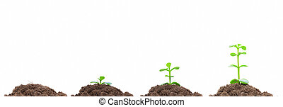 Process of green plan growing in soil. Isolated. Growth concept