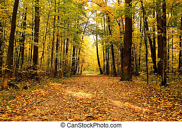 Autumn landscape. Park in the fall. Golden autumn. Road in...