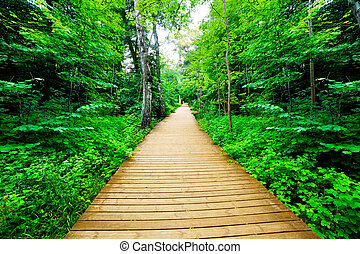 Wooden way in green forest, lush bush. Peaceful nature theme