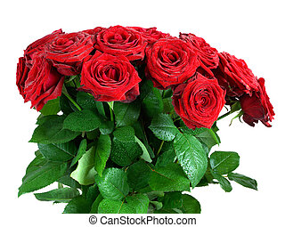 Red wet roses flowers bouquet isolated on white background....