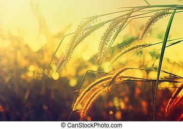 Prairie evening