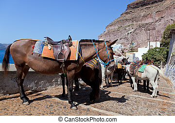Donkeys in Fira on the Santorini island, Greece They are a...