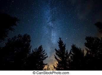 Milky Way over the Forest - Night sky with the Milky Way...
