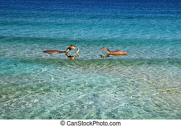 Ducks, birds, feeding - Two ducks in the bright blue water...
