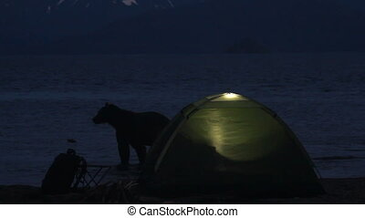 Bear near the tent Night Lake Inside the tent is a fire