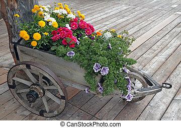 fleurs, bois, brouette, panneau, bois, plancher, détail