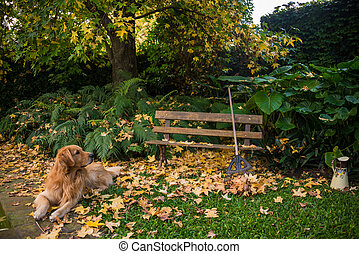 Bench with beautiful foliage, Golden Retriever - Green...