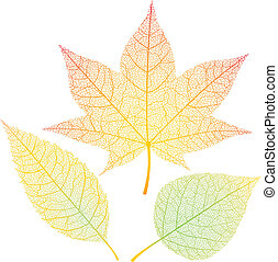 Autumn leaves - Three autumn leaves isolated on white. Eps8....