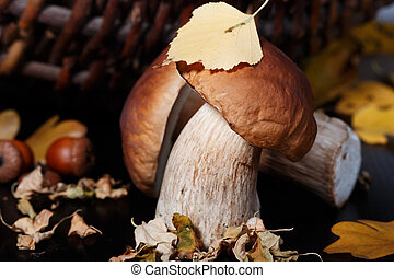 Ceps and autumn leaves - Ceps, basket, acorn and autumn...