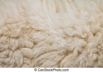 fleece of sheep