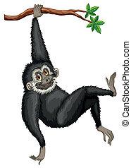 Gibbon - Illustration of a black gibbon hanging