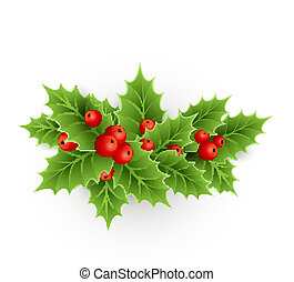 Christmas holly with berries - Vector Christmas holly with...