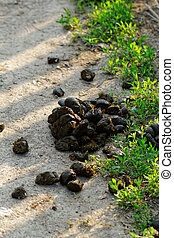 Excrement - Photo of animal feces on the roadside