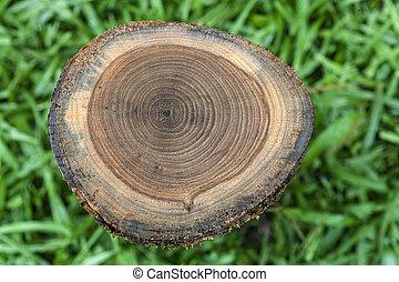 pattern on teak stump - over view of pattern on teak stump...