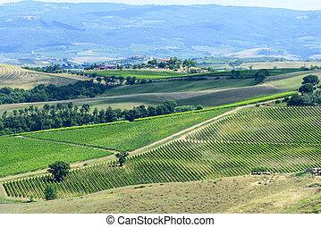 Maremma (Tuscany) - Landscape in Maremma (Tuscany, Italy) at...