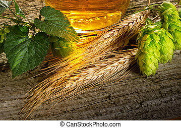 Hop Cones And Barley - still life with beer hops and barley