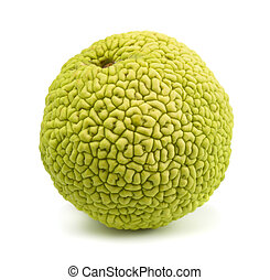 Osage orange maclura pomifera isolated on white
