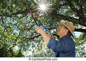 Gardener doing a tree cut - A Gardener doing a tree cut