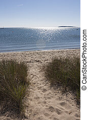Sun shining on ocean, Cape Cod, MA - Sun shining on ocean at...