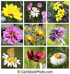 Collage with beautiful flowers - Collage with beautiful...