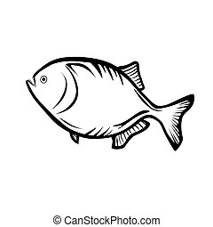 Piranha - Vector illustration : Piranha on a white...