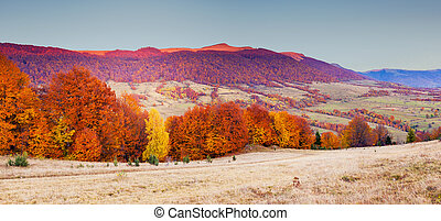 colored autumn forest - Fantastic sunny hills under morning...