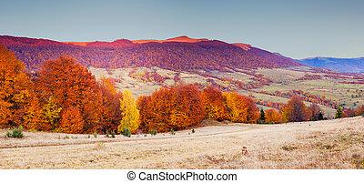 coloreado, otoño, bosque