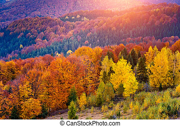 colored autumn forest - Majestic colorful forest with sunny...