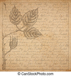 Vintage old paper texture with frame and engraved slyle rose...