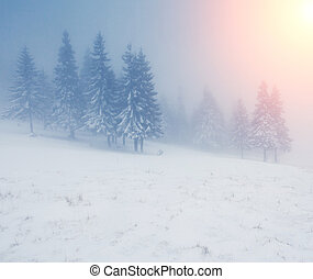 winter - Beautiful winter landscape with snow covered trees
