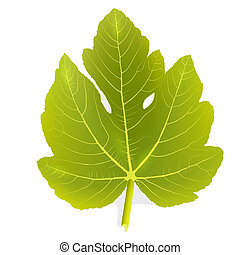 Fig leaf - Single Vector Fig leaf EPS 10 vector