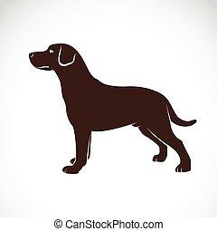 Vector, beeld, van, een, dog, labrador,