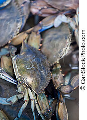 Fish market - Fresh crabs on the fish market
