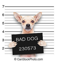 mugshot dog - funny cute pug holding a placard while a...
