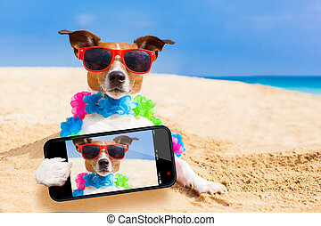 dog at the beach selfie - dog at the beach with a flower...