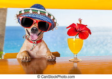 cocktail dog - funny cool chihuahua dog drinking cocktails...