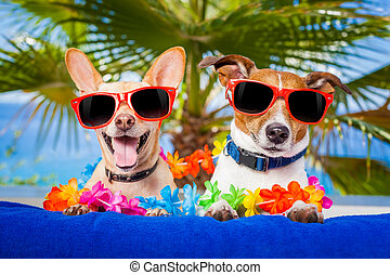 couple of dogs on summer vacation at the beach under a palm...
