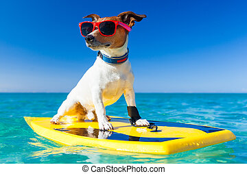 surfer dog - dog surfing on a surfboard wearing sunglasses...
