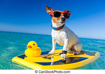 surfing dog - dog surfing on a surfboard wearing sunglasses...