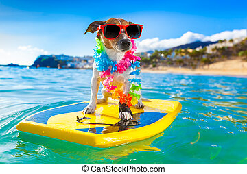surfing dog - dog surfing on a surfboard wearing a flower...