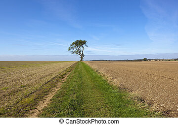 chalky soil and ash tree - a lone ash tree beside a farm...