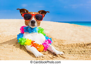 dog at the beach with a flower chain at the ocean shore...